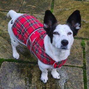 Highland Tartan Coat